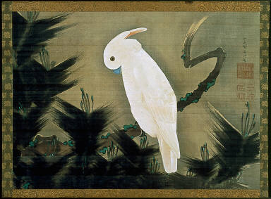White Cockatoo on a Pine Branch