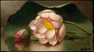 [Lotus Blossom, Water Lily]