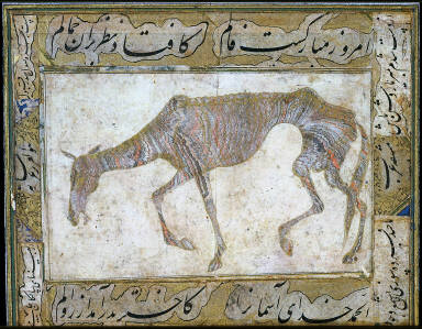 Foundered Horse