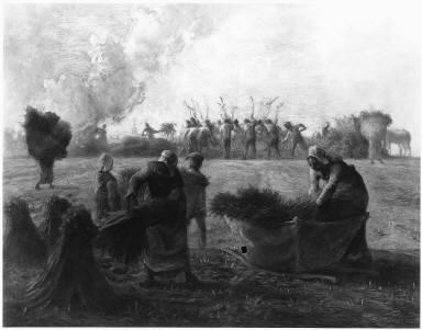 Buckwheat Harvest (I)