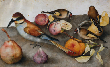 Still Life with Birds and Fruit