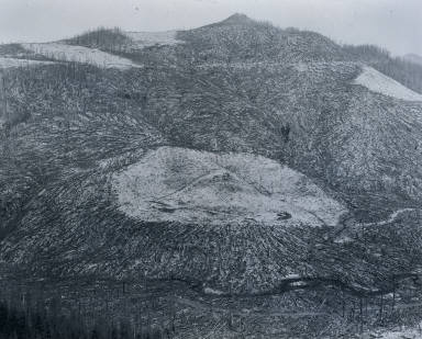 Area Clear Cut Prior to 1980 Eruption Surrounded by Downed Trees - Clearwater Creek Valley - 9 Miles East of Mount St. Helens, Washington