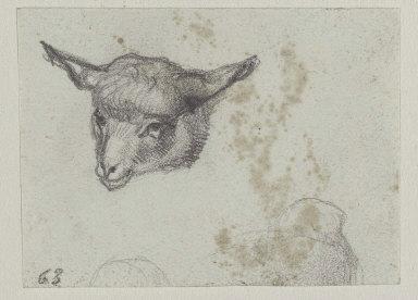 Head of a Lamb