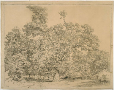 Trees and cottage