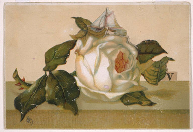 "Untitled (white rose, sailboat, and the letter ""v"")"