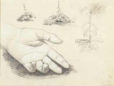 Study of a Hand, Thistle Plants (recto); Studies of Skulls, Skeleton, Baroque Church Interior, and a Cliff (verso)