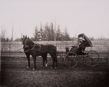 Man and woman sitting in horse-drawn buggy