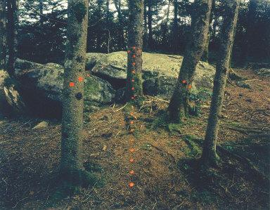 Red Arrow, Roan Mountain, North Carolina