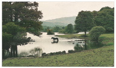 Horse at Rydal Water, Lake District, England