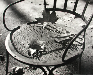 Untitled (Chairs with Leaves, Luxembourg Gardens, Paris)
