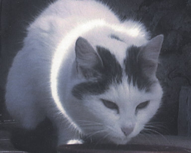 Busi (Kitty)