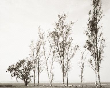 Abandoned Windbreak West of Fontana, California