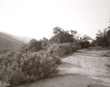 Edge of Abandoned Grapefruit Grove, Above Loma Linda, California