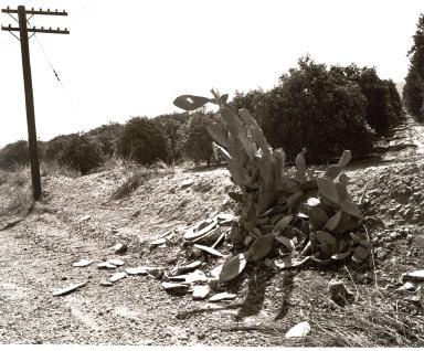 Vandalized Cactus, Redlands, California