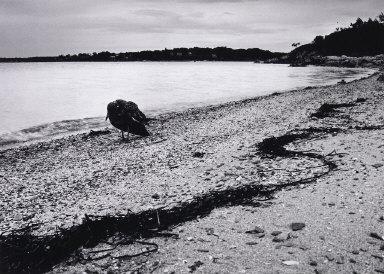 Bird Walking Along Beach