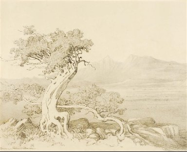 Untitled (transfer drawing for Old Cedars and Spanish Peaks)
