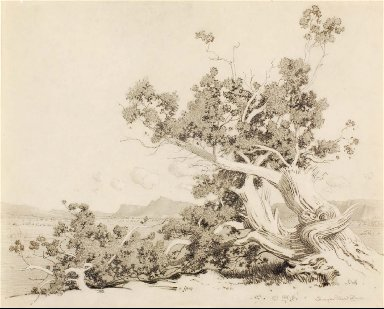 Untitled (Study for Old Cedars, New Mexico)