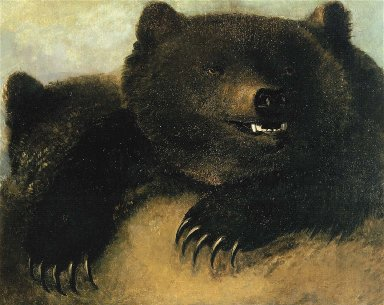 Weapons and Physiognomy of the Grizzly Bear