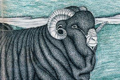 Group of Merino Sheep