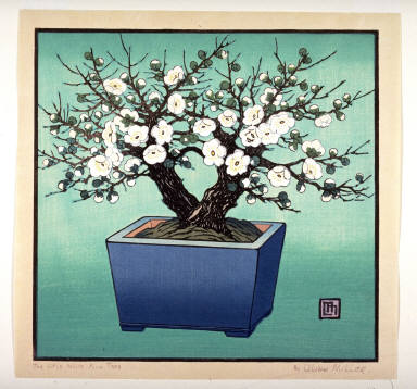 Little White Plum Tree