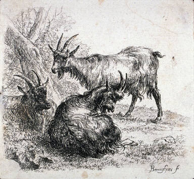 Etching from Various Animals