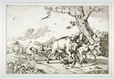 Wild Boar Attacked by Four Dogs