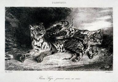 Jeune tigre jouant avec sa mere