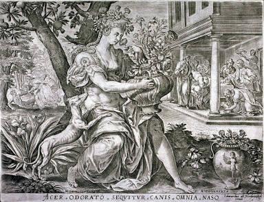 Acer odorato sequitur canis omnia naso ()