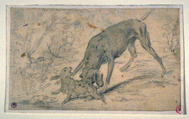 Dog Attacking a Hare