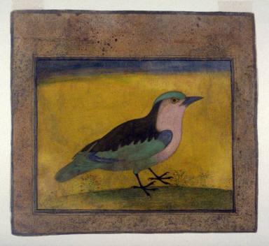 Blue Roller Bird