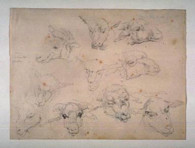 Studies of Heads of Sheep