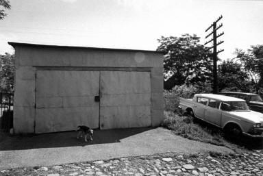 Dog by garage