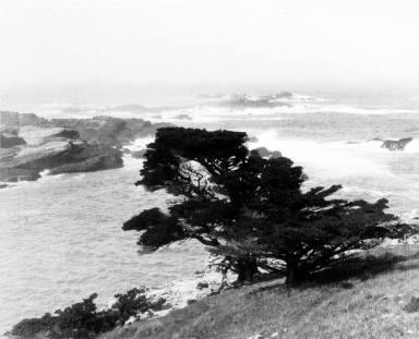 Tree along coast