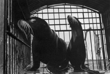 Seals-Circus Knie