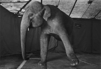 Elephant-Circus Knie