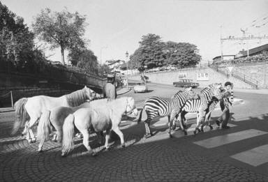 Circus Animals on Street