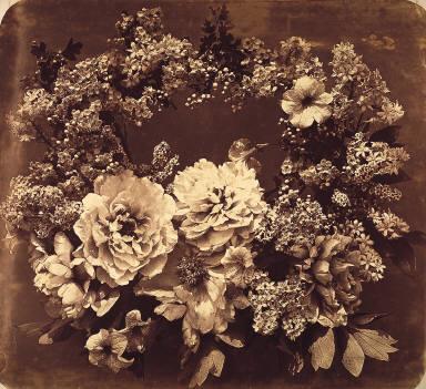 Camelias and Lilacs