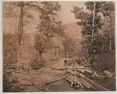 Wood cutting in the Highlands