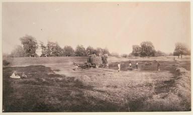 Hay Field, Bury Hill