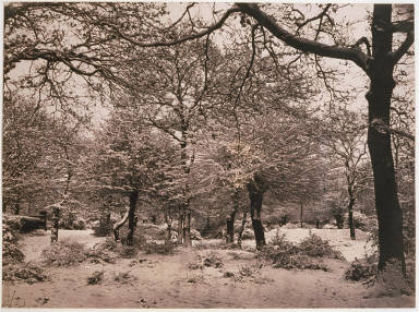 Snow scene in Epping forest