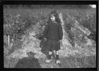 Near Bordeaux Vineyard Child
