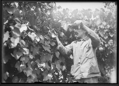 Dr. Manny (?) at Grape Vines in Garden