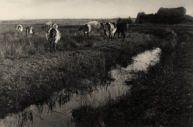 [Cattle on the Marshes, Life and Landscape on the Norfolks Broads]