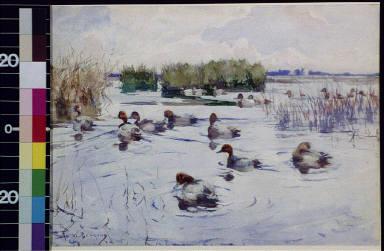 Numerous ducks in pond