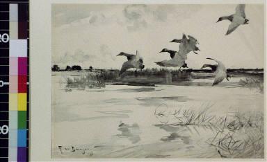 Five geese landing
