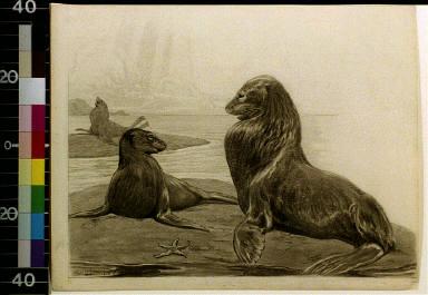 Seals by beach