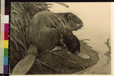 Beaver with baby beaver