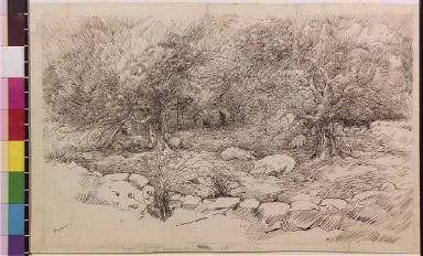 Pigs in orchard with stone fence