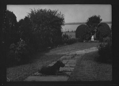 """Dog on the grounds of """"The Shallows,"""" property of Lucien Hamilton Tyng, Southampton, Long Island"""