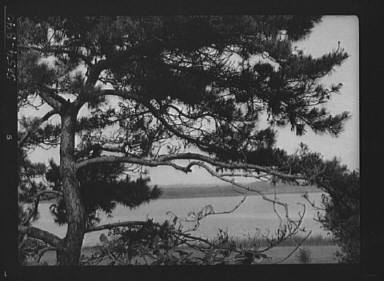"""Tree and water view at """"The Shallows,"""" property of Lucien Hamilton Tyng, Southampton, Long Island"""